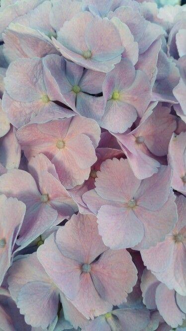 ♥ Rose Quartz - Serenity - Lilac ♥ - Obrázok č. 69