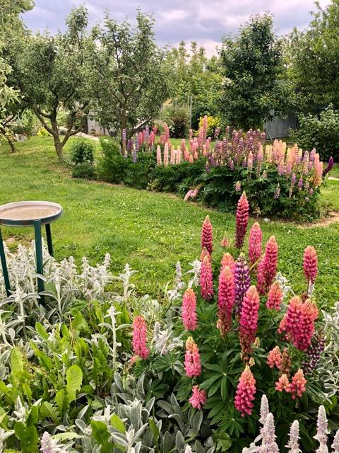 Koleginina zahrada - Obrázok č. 2