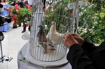 holubičky bolo prekvapenie, skvelý nápadík, len bacha, nech vás holúbätko neokadí