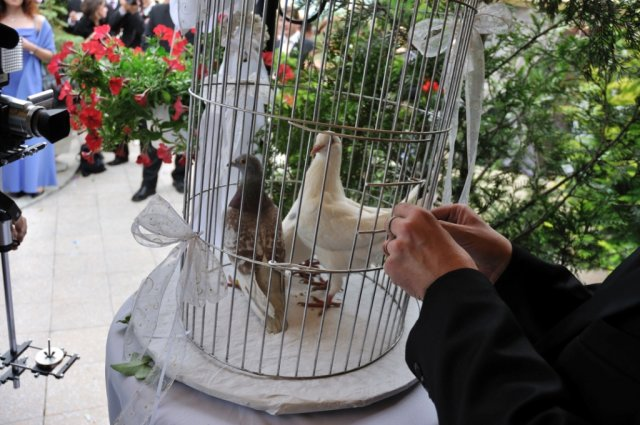 Ako to prebiehalo v deň D - holubičky bolo prekvapenie, skvelý nápadík, len bacha, nech vás holúbätko neokadí