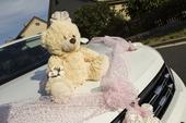 Medvěd a medvědice na auta,