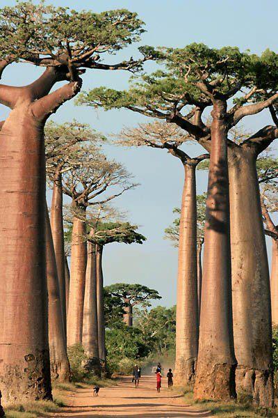 Honneymoon inšpirácie - Madagascar