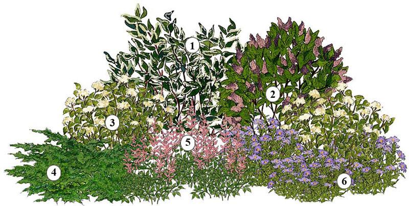 Záhony, výsadby a nejaké tie doplnky - Kvetinový záhon biela a orgován - vhodný pre otvorené slnečné miesta