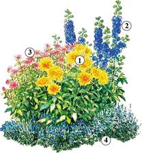 "1. Kaktusová dália (Dahlia  ""Christian Deegen) 2. Stračonôžka (Delphinium) 3. Monarda (Monarda) 4. Veronika hrdobárkovitá  (Veronica teucrium)"