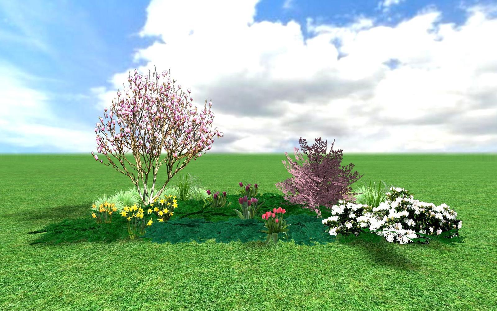 Záhony, výsadby a nejaké tie doplnky - : magnolie s např. mandloní trojlaločnou Prunus triloba. Doprovodem jim jsou bílý nízký rododendron, pokryvné jehličnany, jarní cibuloviny. V létě na tomto záhoně namísto narcisů a tulipánů mohou kvést denivky