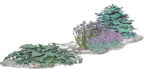 Kvetinový záhon strieborné ostrovy - vhodný pre otvorené slnečné miesta