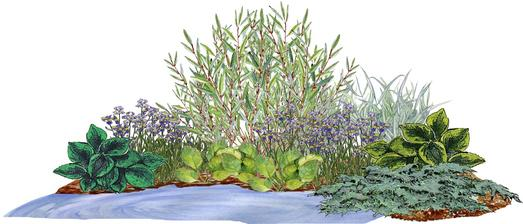 Kvetinový záhov s vŕbu a borievkou (ku vode) - vhodný pre otvorené slnečné miesta
