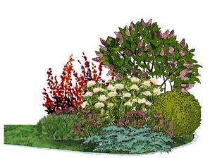 Kvetinový záhon s orgovánom a dráčom - vhodný pre otvorené slnečné miesta