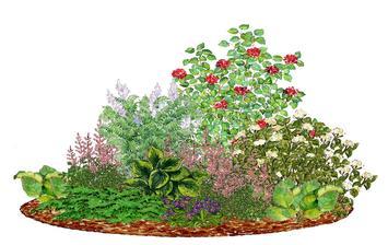 Kvetinový záhon s kalinou - vhodný do tieňa