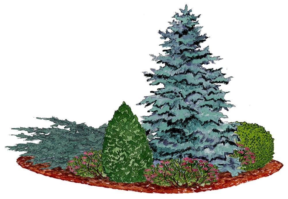 Záhony, výsadby a nejaké tie doplnky - Kvetinový záhon so smrekom pichľavým - vhodný do polotieňa