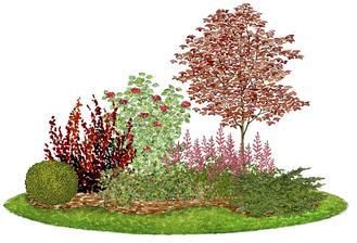 Kvetinový záhon s javorom - vhodný pre otvorené slnečné miesta