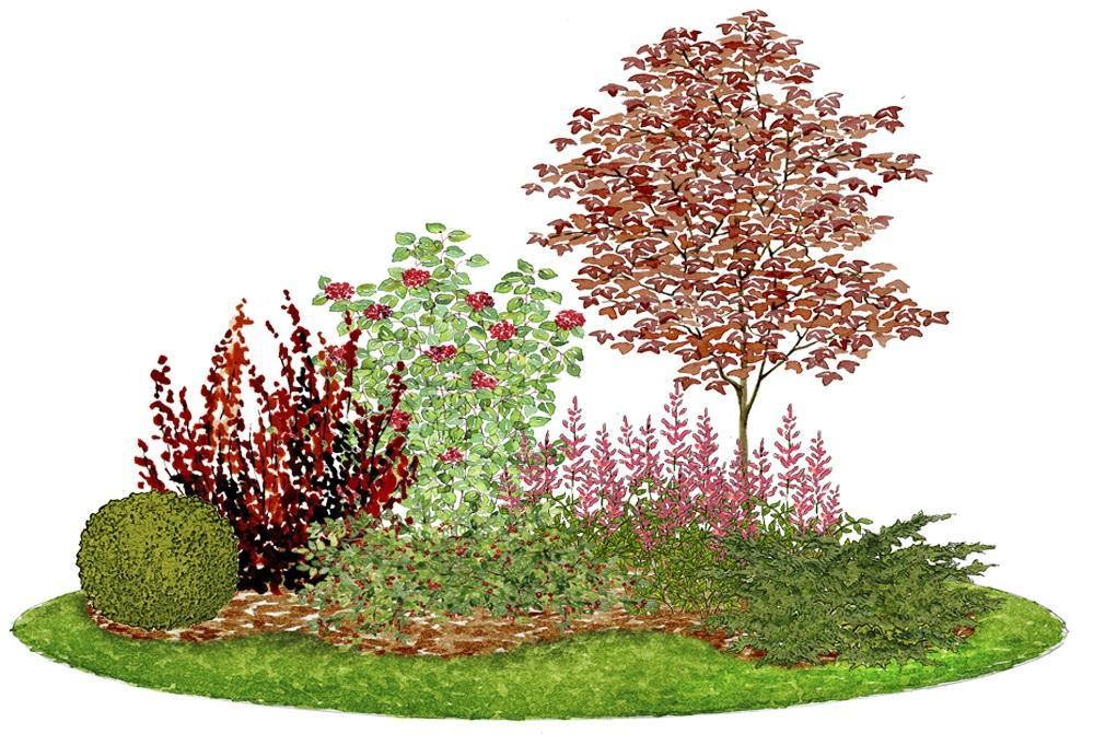 Záhony, výsadby a nejaké tie doplnky - Kvetinový záhon s javorom - vhodný pre otvorené slnečné miesta