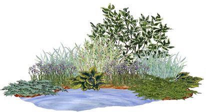 Kvetinový záhon s vŕbou a svíbom (ku vode) - vhodný pre otvorené slnečné stanovištia
