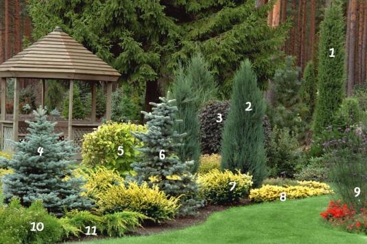 Záhony, výsadby a nejaké tie doplnky - Okrasná záhradka z drevín