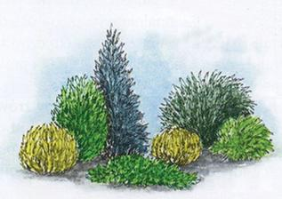 3. Rastliny sú vysadené v dvoch rovnobežných radoch