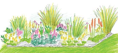 Záhon okrasných trav a cibulovin