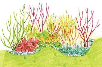 Okrasné trávy v doprovodu dřevin se zajímavou kůrou