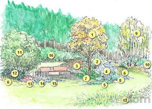 Návrh skupinovej výsadby pod stromami v  odľahlej časti prírodnej záhrady (v  jesennom sfarbení)