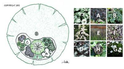 Black and White Garden (záhon vhodný pod strom ako je osika, breza alebo javor)