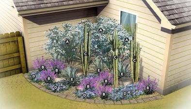 púštna záhrada