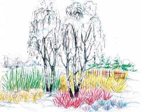Nechajte záhradu rozkvitnúť aj v zime