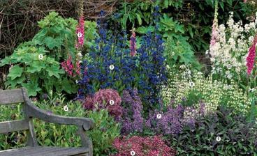 Záhon v letných farbách