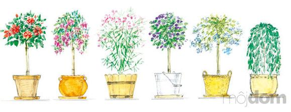 ibištek, fuksia, oleander, lantana, olovník, previsnutá vŕba