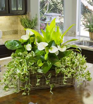 Výsadby do nádob - Houseplant Garden
