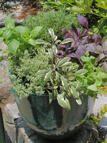 Zeleninové a bylinkové záhony a výsadby - Grilling Container Garden