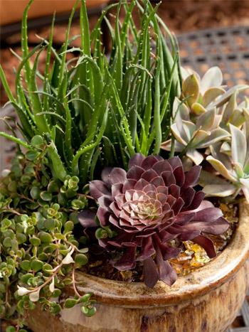 Výsadby do nádob - Succulent Container Garden