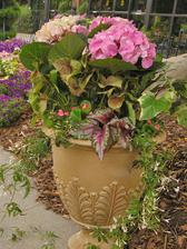 Pretty in Pink Hydrangea Container Garden