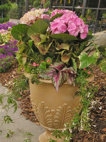 Výsadby do nádob - Pretty in Pink Hydrangea Container Garden