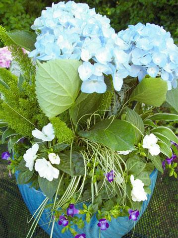 Výsadby do nádob - Blue Hydrangea Container Garden