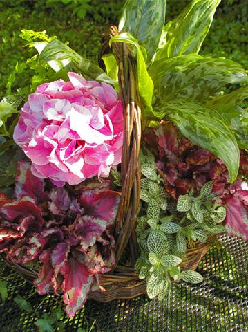 Výsadby do nádob - Mother's Day Hydrangea Basket