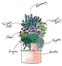 Spring Herb Container Garden