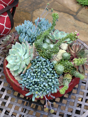 Výsadby do nádob - Summer Succulent Container