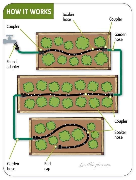 Zeleninové a bylinkové záhony a výsadby - Obrázok č. 17
