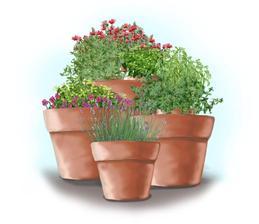 Čajová záhrada v kvetináčoch