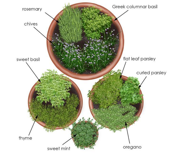 Zeleninové a bylinkové záhony a výsadby - Obrázok č. 39