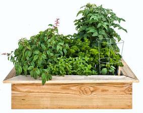 Easy and Tasty 4 x 4-foot Kids' Garden