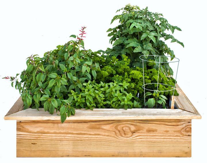 Zeleninové a bylinkové záhony a výsadby - Easy and Tasty 4 x 4-foot Kids' Garden