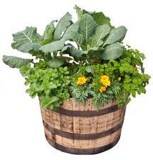 Herbs, Color & Collards Container Garden