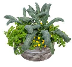 Parsley & Kale Container Garden