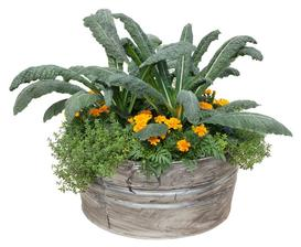 Flowers, Kale & Thyme Container Garden