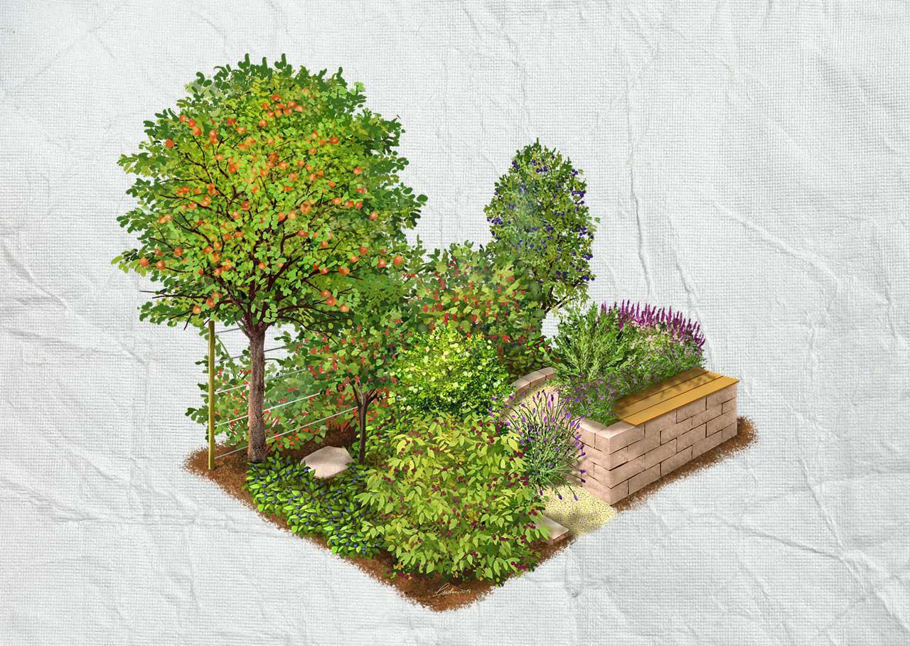 Zeleninové a bylinkové záhony a výsadby - Záhrada s plodmi a bylinami