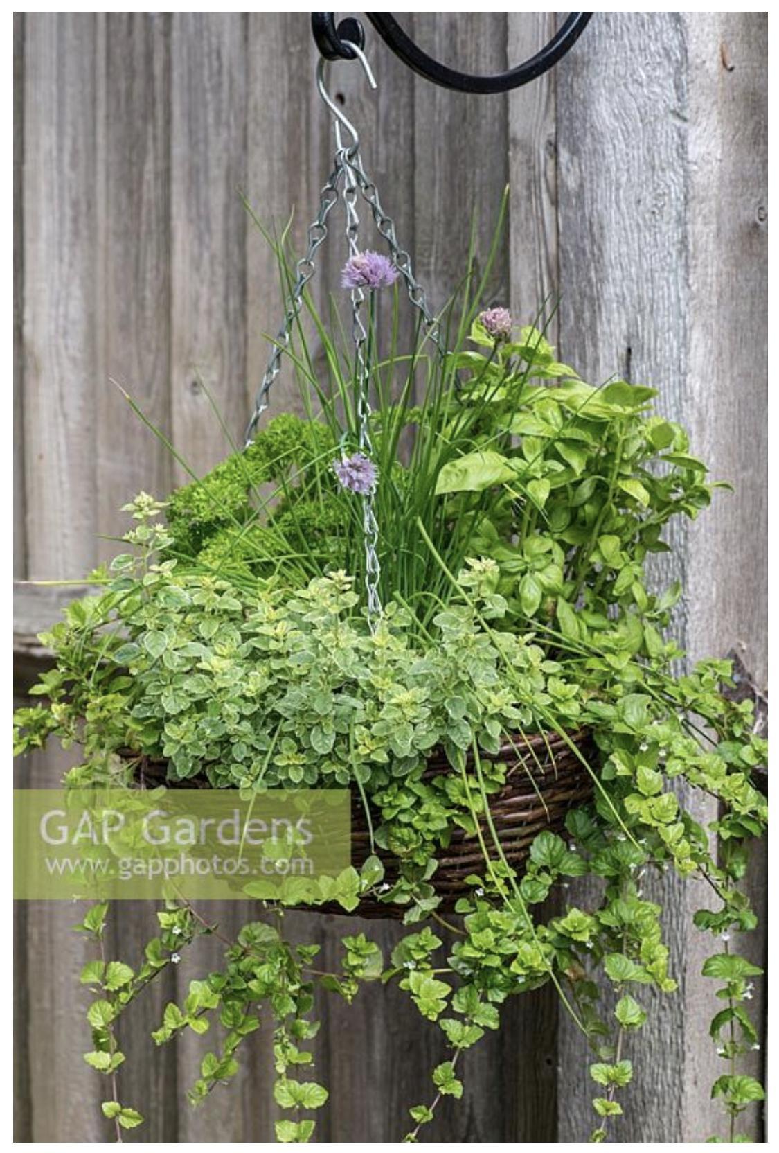 Zeleninové a bylinkové záhony a výsadby - Obrázok č. 93