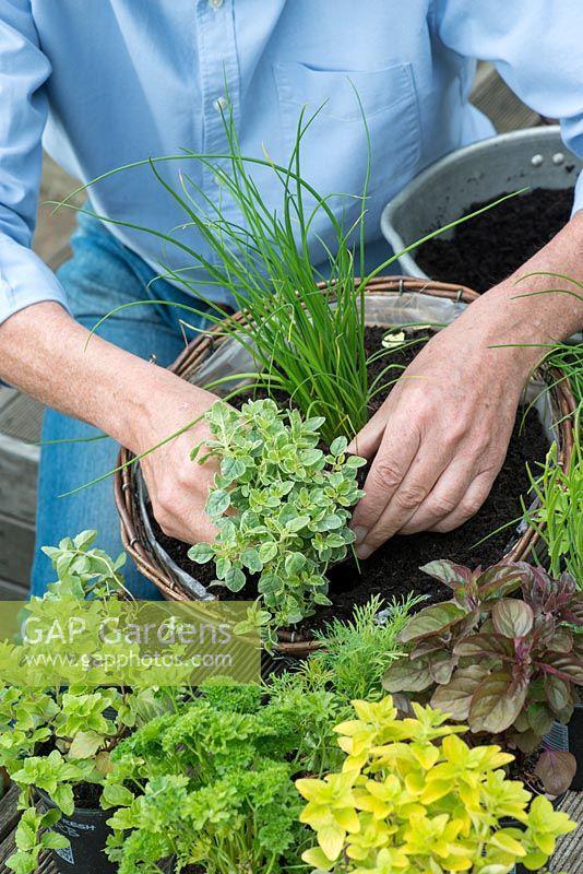 Zeleninové a bylinkové záhony a výsadby - Obrázok č. 95