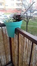 Rakosie natiahnute tak hned je tam menej vidiet :-) aj kvetina na skusku :-) a uz aj pradlo mozem zavesit von:-)