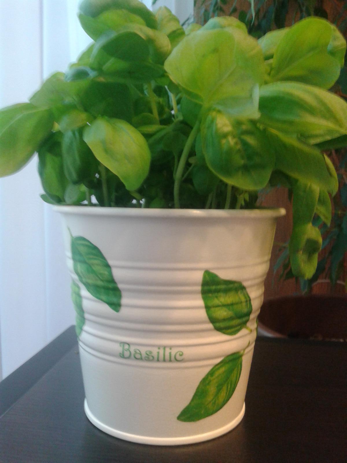 Moje výtvory - Květináč na bazalku - dárek pro kamarádku