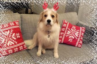 vánoční polštáře a vánoční hafan :-)